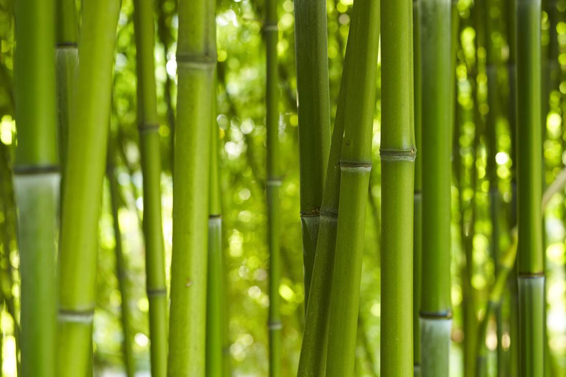 jetzt bestellen fototapete bambus wald im sonnenschein livingwalls. Black Bedroom Furniture Sets. Home Design Ideas